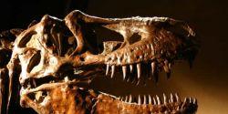 Estudo confirma presença de dinossauros em Mato Grosso do Sul